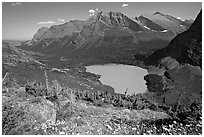 Alpine wildflowers, Grinnell Lake, and Allen Mountain. Glacier National Park ( black and white)