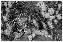 Ground close-up with flowers, cactus, and sand. Great Sand Dunes National Park and Preserve ( black and white)