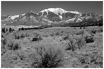Desert-like sagebrush and snowy Sangre de Cristo Mountains. Great Sand Dunes National Park and Preserve ( black and white)