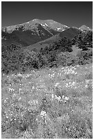 Summer meadow and Sangre de Cristo Mountains near Medano Pass. Great Sand Dunes National Park and Preserve ( black and white)