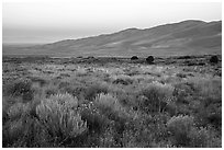 Grasslands with rubber rabbitbrush, sagebrush, and dunefield at dawn. Great Sand Dunes National Park and Preserve ( black and white)