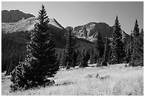 Subalpine meadow in Sand Creek Valley. Great Sand Dunes National Park and Preserve ( black and white)