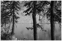 Trees on shore on Lower Sand Creek Lake. Great Sand Dunes National Park and Preserve ( black and white)