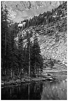 Firs on shoreline, Lower Sand Creek Lake. Great Sand Dunes National Park and Preserve ( black and white)