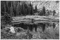 Lakeshore in autumn with shurbs and fir trees, Lower Sand Creek Lake. Great Sand Dunes National Park and Preserve ( black and white)