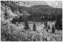 Autumn vegetation and alpine lake, Lower Sand Creek Lake. Great Sand Dunes National Park and Preserve ( black and white)