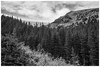 Peak rising above fir forest. Great Sand Dunes National Park and Preserve ( black and white)