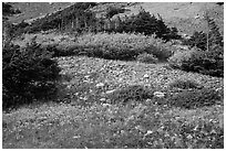 Alpine meadows in autumn. Great Sand Dunes National Park and Preserve ( black and white)