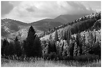 Hills covered with trees in autumn foliage near Medano Pass. Great Sand Dunes National Park and Preserve ( black and white)