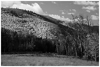 Meadow and hills in autumn foliage near Medano Pass. Great Sand Dunes National Park and Preserve ( black and white)