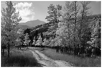 Medano primitive road surrounded by trees in autumn color. Great Sand Dunes National Park and Preserve ( black and white)