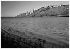 Reeds, Jackson Lake, and distant Teton Range, early morning. Grand Teton National Park, Wyoming, USA. (black and white)
