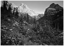 Meadow, wildflowers, and peaks at sunset. Grand Teton National Park ( black and white)