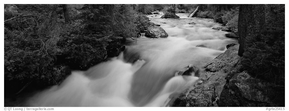 Creek flowing in forest. Grand Teton National Park (black and white)