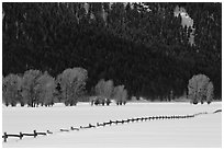 Long fence, cottonwoods, and hills in winter. Grand Teton National Park ( black and white)