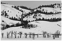 Hills and trees, Blacktail Butte in winter. Grand Teton National Park ( black and white)