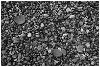 Close-up of colorful pebbles and fallen aspen leaves, Jackson Lake. Grand Teton National Park ( black and white)