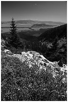 Wildflowers, view over Jackson Hole from Garnet Canyon. Grand Teton National Park ( black and white)