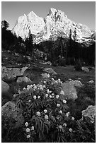 Columbine and Tetons, evening. Grand Teton National Park, Wyoming, USA. (black and white)