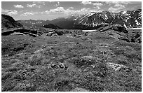 Alpine flowers on  tundra along Trail Ridge road. Rocky Mountain National Park, Colorado, USA. (black and white)