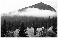 Fog, trees, and peak, Glacier basin. Rocky Mountain National Park, Colorado, USA. (black and white)