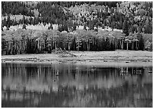 Mixed trees and  reflections. Rocky Mountain National Park, Colorado, USA. (black and white)