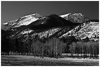Aspens and Bighorn mountain in winter. Rocky Mountain National Park, Colorado, USA. (black and white)