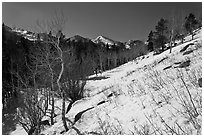 Glacier Basin in winter. Rocky Mountain National Park, Colorado, USA. (black and white)