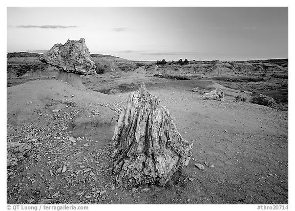 Pedestal petrified log and petrified stump sunset,. Theodore Roosevelt National Park, North Dakota, USA.
