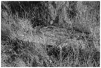 Foundation stone of Elkhorn Ranch amongst grasses and summer flowers. Theodore Roosevelt National Park, North Dakota, USA. (black and white)