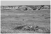 Prairie Dog town, South Unit. Theodore Roosevelt National Park, North Dakota, USA. (black and white)