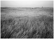 Prairie of tall grasses with subtle autumn color. Wind Cave National Park ( black and white)