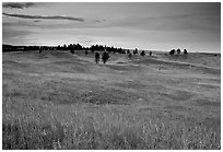 Rolling hills covered with grasses and scattered pines, dusk. Wind Cave National Park, South Dakota, USA. (black and white)