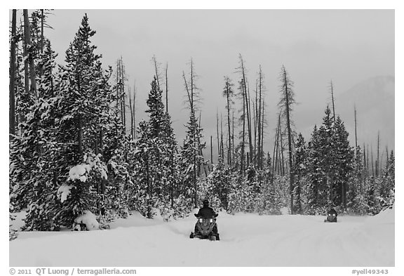 Snowmobiles. Yellowstone National Park (black and white)