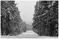 Snow-covered road. Yellowstone National Park, Wyoming, USA. (black and white)