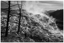 Canary Springs, morning. Yellowstone National Park ( black and white)