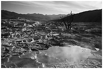 Pool, travertine terraces, and dead trees, Mammoth Hot Springs. Yellowstone National Park ( black and white)