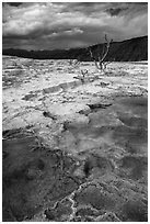 Travertine terraces and dead trees, Mammoth Hot Springs, afternoon. Yellowstone National Park ( black and white)