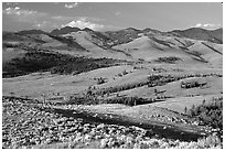 Bushes and rolling Hills in summer, Specimen ridge. Yellowstone National Park, Wyoming, USA. (black and white)