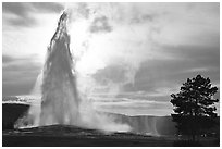 Old Faithful Geyser erupting, backlit by late afternoon sun. Yellowstone National Park, Wyoming, USA. (black and white)
