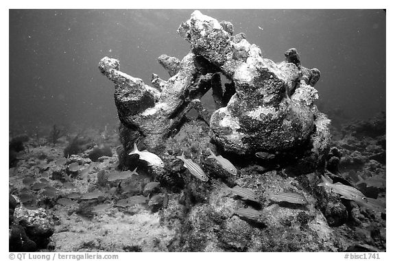 Coral. Biscayne National Park (black and white)