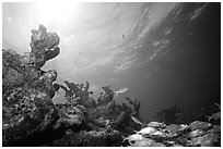 Smallmouth grunts and coral. Biscayne National Park ( black and white)