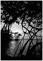 Biscayne Bay viewed through mangal at edge of water, sunset. Biscayne National Park ( black and white)