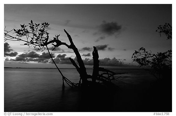 Biscayne Bay viewed through fringe of mangroves, dusk. Biscayne National Park (black and white)