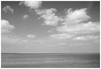Sky and Elkhorn coral reef. Biscayne National Park ( black and white)