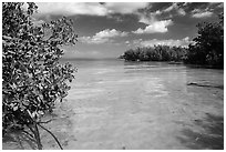 Mangrove forest on fringe of Elliott Key, mid-day. Biscayne National Park, Florida, USA. (black and white)