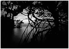 Silhouetted mangroves at dusk. Biscayne National Park ( black and white)