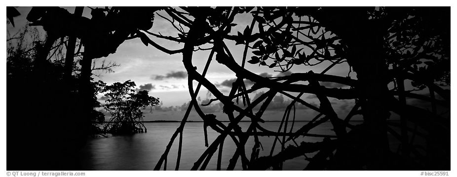 View over Florida Bay through mangrove branches at sunset. Biscayne National Park (black and white)