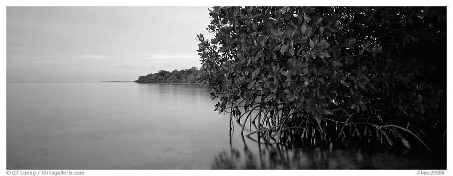 Florida Bay shore at dusk. Biscayne National Park (black and white)