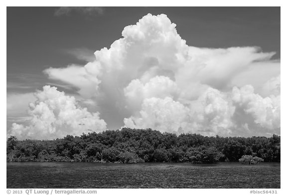 Cumulonimbus clouds above Elliot Key mangroves. Biscayne National Park (black and white)